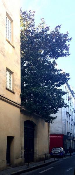 Un arbre dans la ville