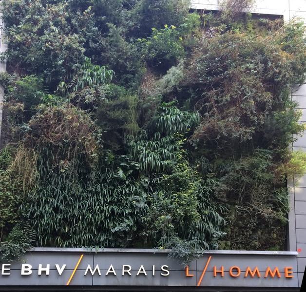Mur végétal du BHV